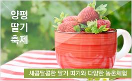 양평 딸기 축제